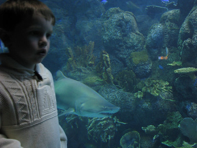 Christmas Program and Aquarium 091