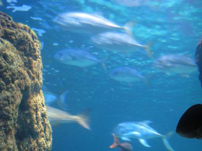 Christmas Program and Aquarium 064