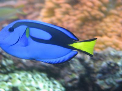 Christmas Program and Aquarium 084
