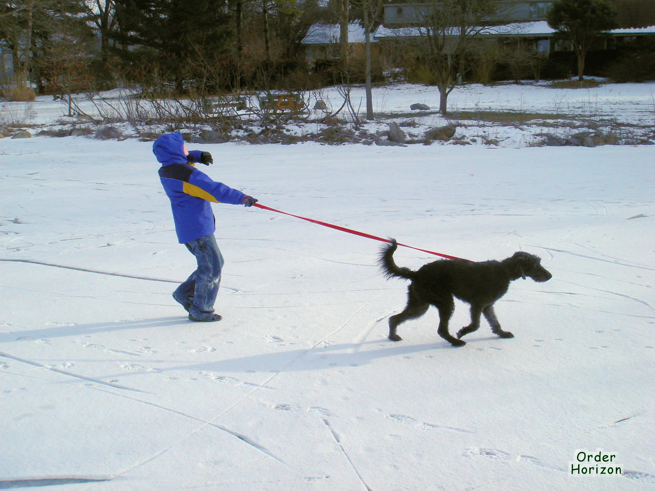 Best to have a sled if your dog wants to pull on ice