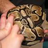 Joey-touching-snake-3-11-06