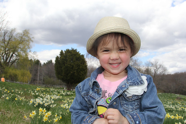 Daffodil Farm in Litchfield