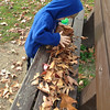 Collecting leaves.