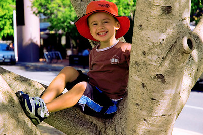 Climbing Trees at Southbank