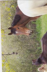 04_magic_horses