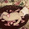 Ella Claire-3 months :
