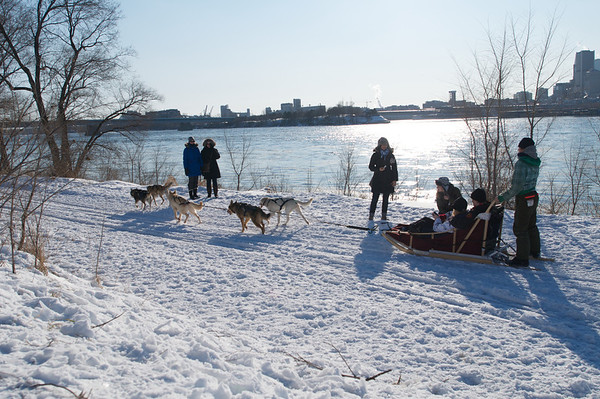 Dog sledding in the middle of the city!