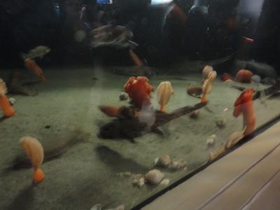 Felicity Vancouver Aquarium