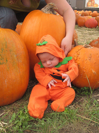 First Pumpkin Patch
