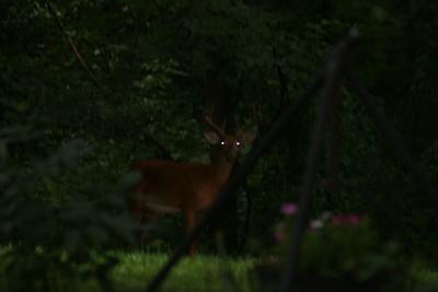 Football & Deer July 09