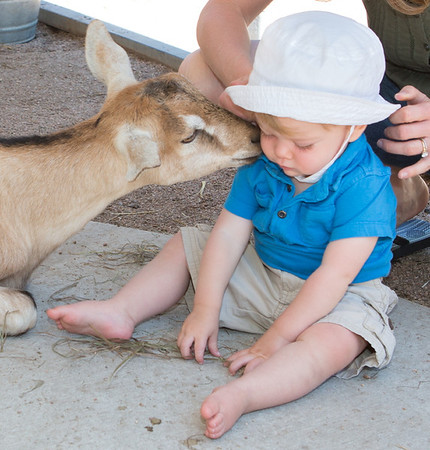 Fun in the Creek and Petting Zoo