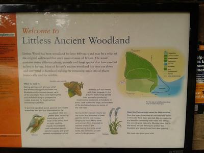 Grafham water woodland