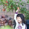 Caroline heeft de (paar) appels uit eigen tuin geplukt. Inmiddels verwerkt in de appelmoes (15 september 2013).