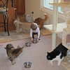 Chase was rearranging the kitties food bowls.  They thought is was time for them to eat.