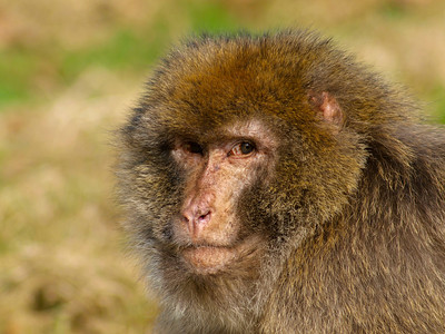 Joni visits the Monkey Forest