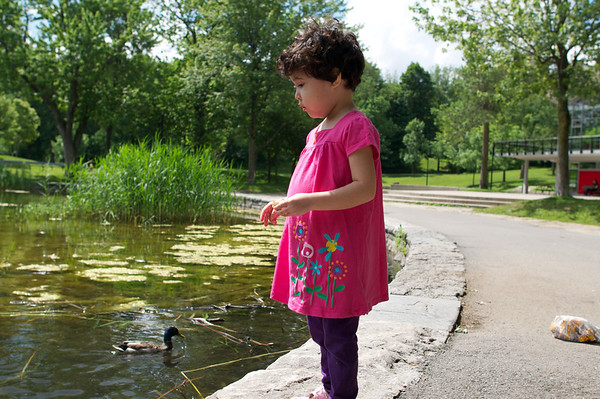 Cyane feeding ducks at Beaver Lake in Mont Royal Park