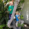 The kids climbing the tree in our front/side yard and looking real.
