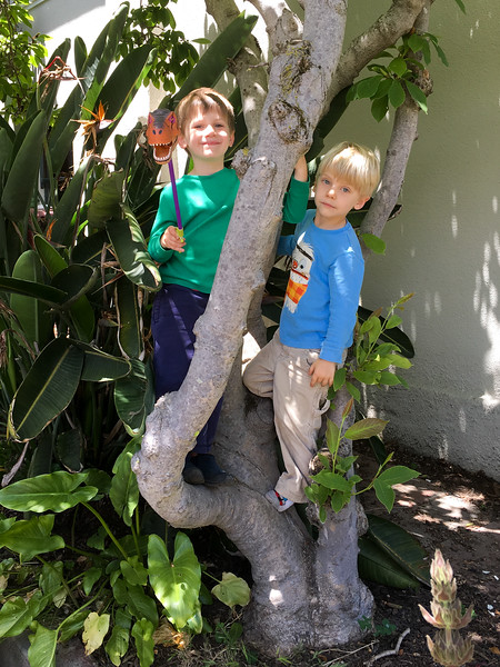 """The kids climbing the tree in our front/side yard and looking """"nice""""."""