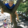 Climbing the trees at the top of Piedmont Canyon on Father's Day