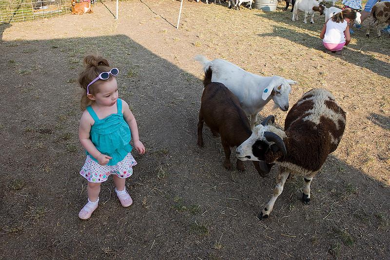 More petting zoo.
