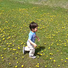 Tip toe through the dandelions.