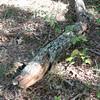 Tree-limb-2009_10_22_1755