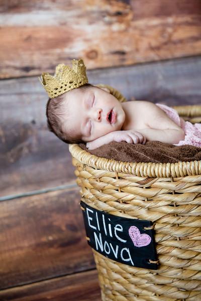 Baby Ellie Nova
