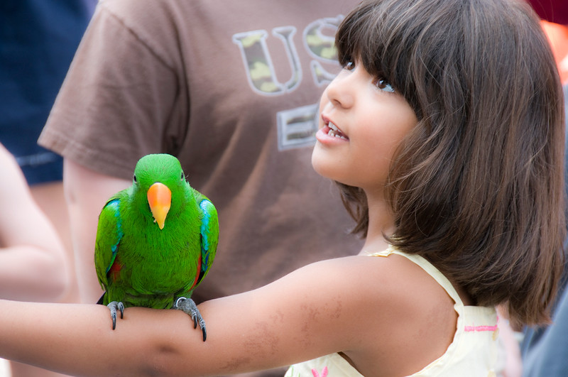 The Emerald Parrot and the Wondrous Girl