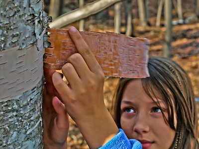11/27/11:  Regan peeling some birch bark for her presentation at school.    Our great day hiking was topped of by finding ticks on us.  Yuck!