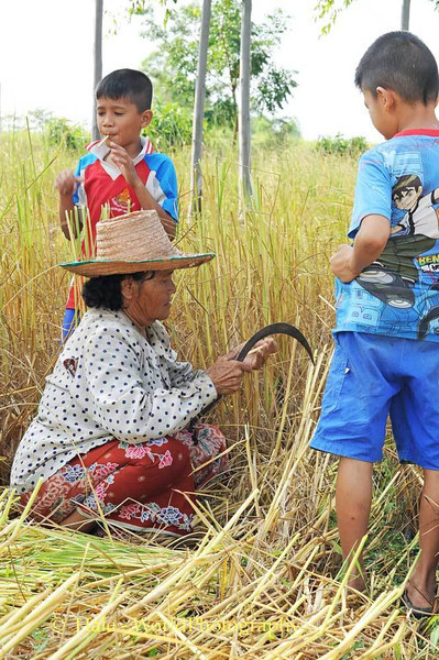 Grandmother Makes Rice Straw Whistles for Her Grandsons