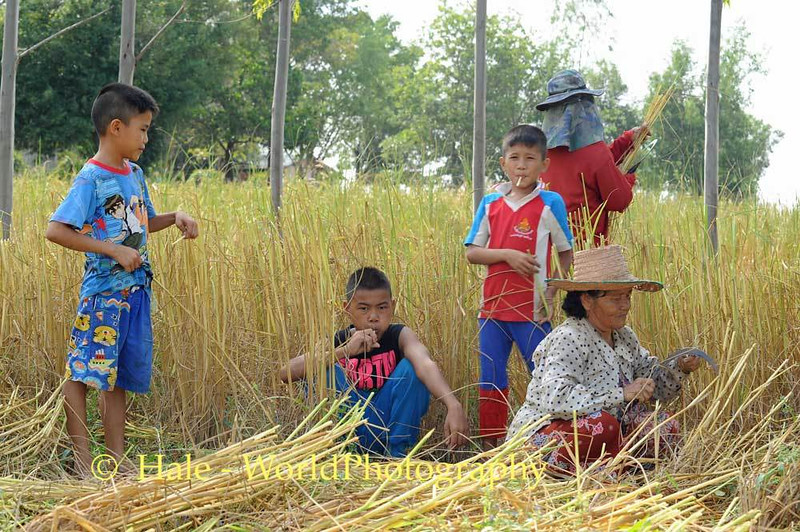 Boys Play Rice Straw Whistles for Their Grandmother