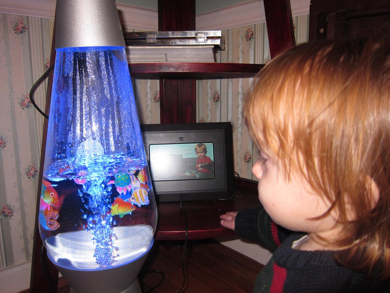 Looking at the fake fish