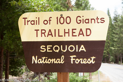 Sequoia Trail of 100 Giants