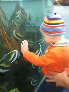 Theo with the fish at the Gatlinburg aquarium