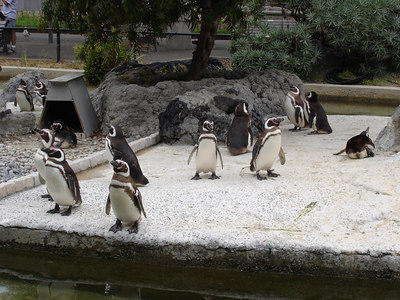 I also liked the penguins because they were playful.
