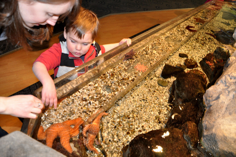 Happy Gotcha Day at the Aquarium!!