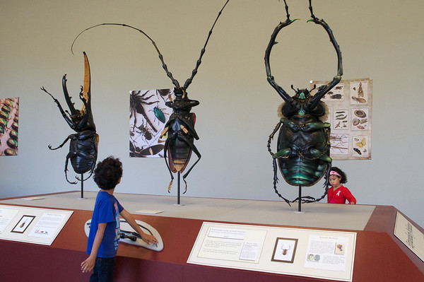 Big beautiful beetles