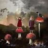 The mushroom garden