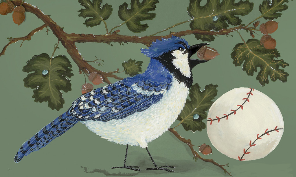 Bluejay with Baseball