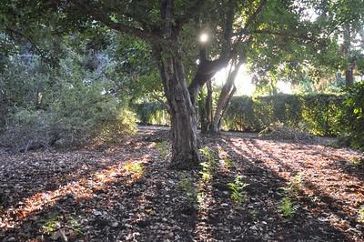Woods Across from Kallem Perennial Garden