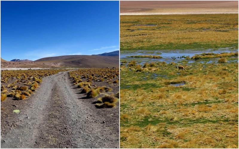 Landscapes of the Atacama Desert