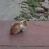 Gato de barrio Mariposas