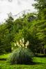 Decorative grasses in the Rio Simpson National Reserve, Chile, South America.