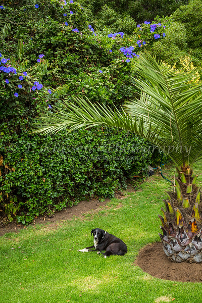 Tropical vegetation in the gardens of Vina del Mar, Chile, South America.