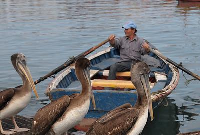 San Antonio Pelicans