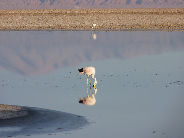 9 APR 2011 Atacama salt flat tour