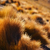 "Tumble Weeds are found all over the Atacama Desert - San Pedro de Atacama.  Travel photo from San Pedro de Atacama, Chile. <a href=""http://nomadicsamuel.com"">http://nomadicsamuel.com</a>"