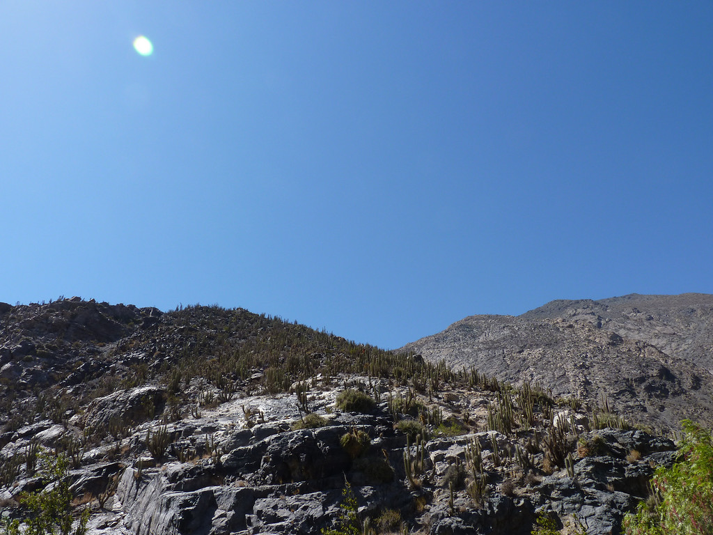 Cactus land.