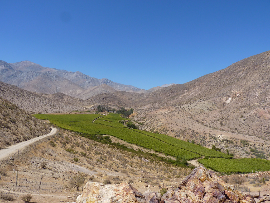 Andean desert!  More vineyards.