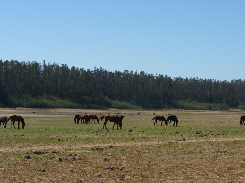 Horses in the National Park